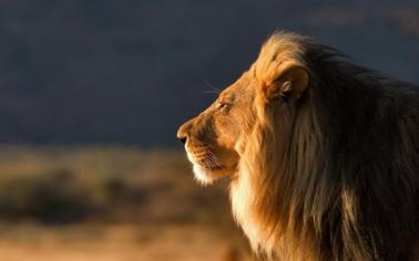 Туры на любой вкус с Texpert - увлекательные путешествия - заказывайте Охота в ЮАР