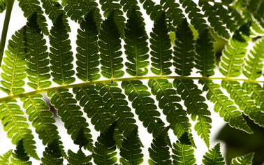 Туры на любой вкус с Texpert - увлекательные путешествия - заказывайте Природный рай Коста Рики