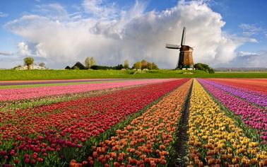 Туры на любой вкус с Texpert - увлекательные путешествия - заказывайте Любителям тюльпанов посвящается! Стамбул+Амстердам в одном туре